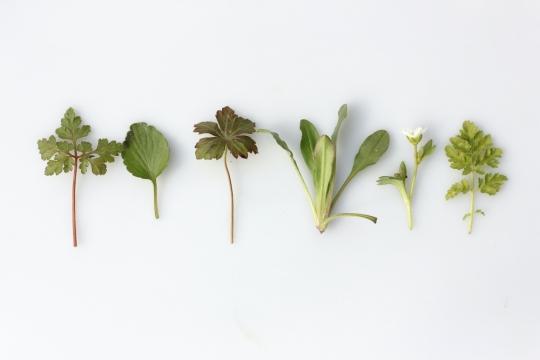 3 bylinky, ktoré pomôžu znormalizovať váš menštruačný cyklus image